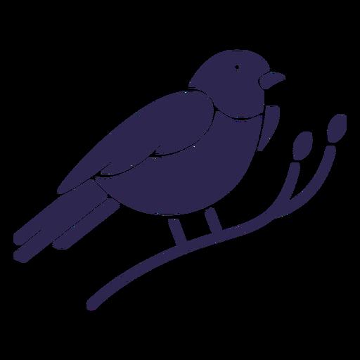 Montaña bluebird pájaro negro