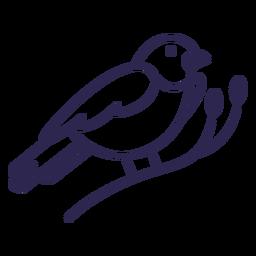 Mountain bluebird bird stroke