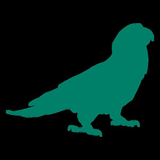 Parrot bird silhouette bird