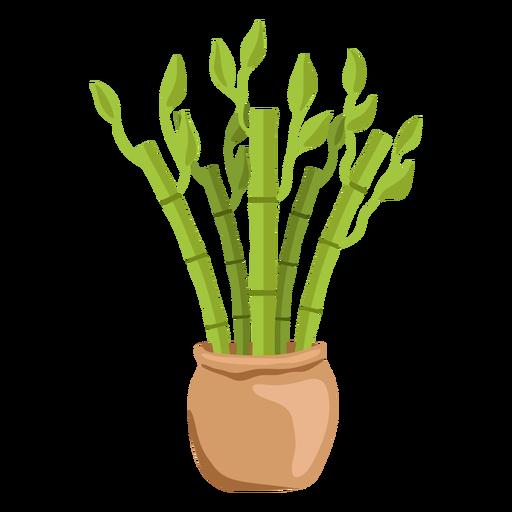 Bamboo lucky plant set illustration