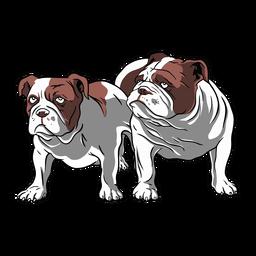 Bulldog pair illustration