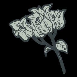 Mão de buganvílias flores desenhada