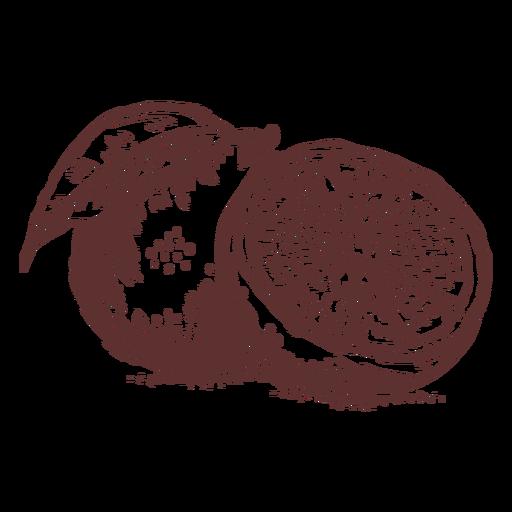 Dibujado a mano frutas pomelo en rodajas