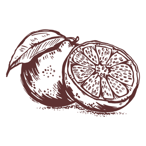 Fruits grapefruit sliced hand drawn