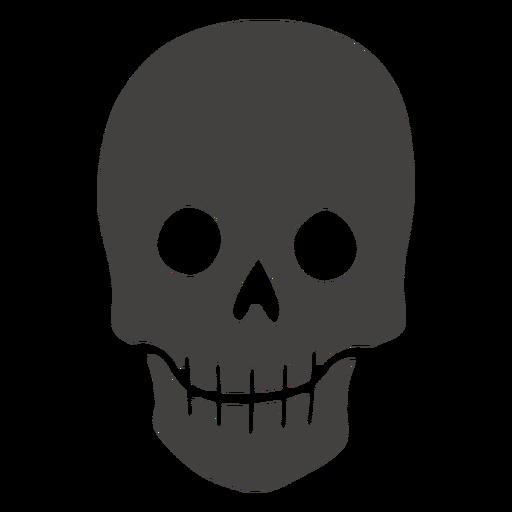 Skull human visible teeth