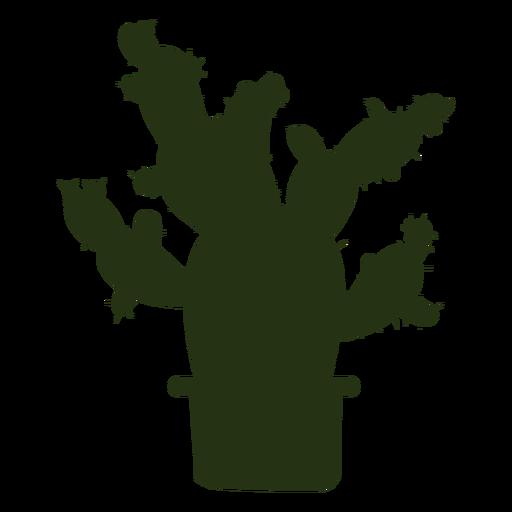 Plantas suculentas complejo silueta gruesa