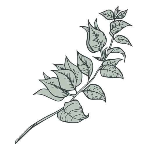 Tree branch leaves hand drawn Transparent PNG
