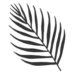 Silhueta de palmeira areca de folhas tropicais