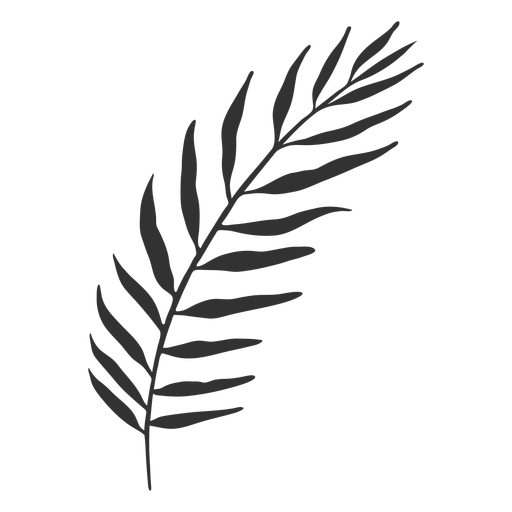 Tropical leaves coconut palm silhouette Transparent PNG