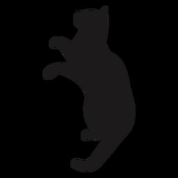 Katze, die Tierschattenbild nachschaut