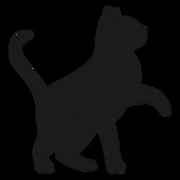 Katze, die Silhouettekatze nachschaut