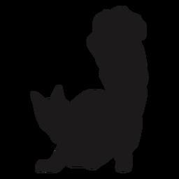 Katze, die Schwanztierschattenbild zeigt