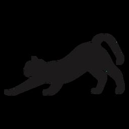 Katze, die Tierschattenbild verfolgt