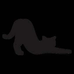 Katze, die Tierschattenbild streckt