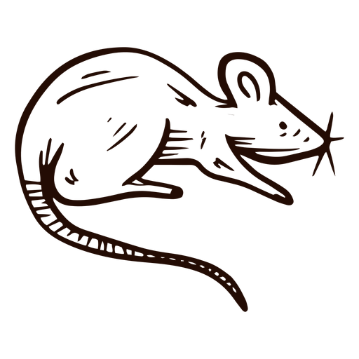 Dibujado a mano animal rata