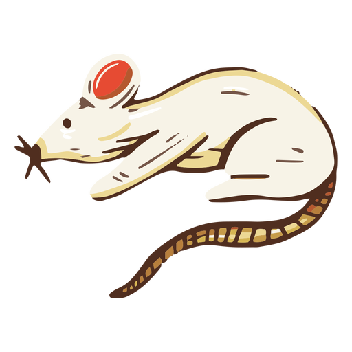 Rat animal illustration Transparent PNG