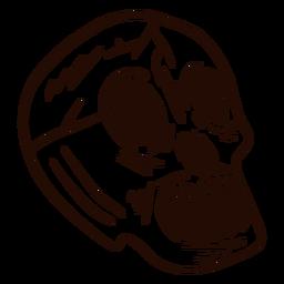 Skull hand drawn