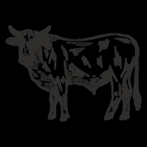 Toro animal blanco y negro