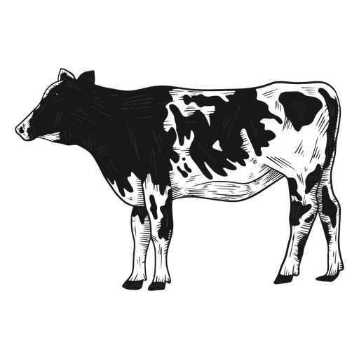 Cow looking side illustration