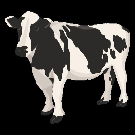 Cow side illustration
