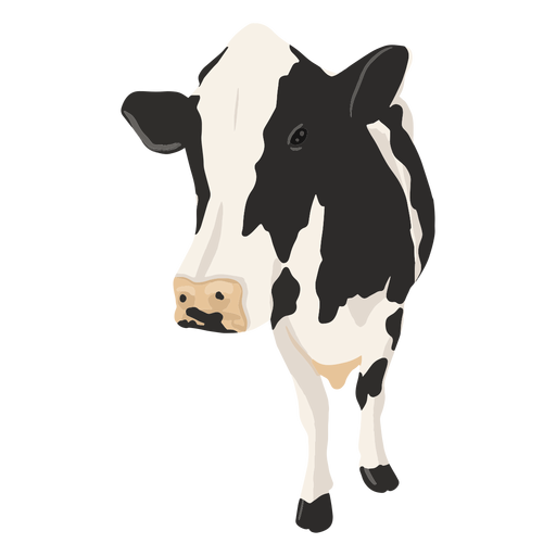 Front cow illustration