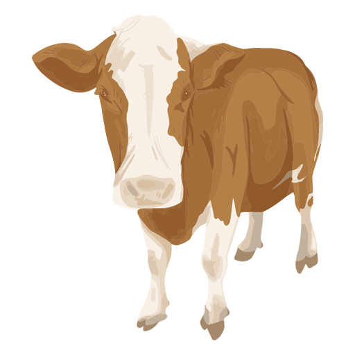 Standing cow front illustration