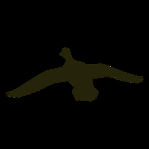As asas dianteiras do ganso de caça se espalham voando