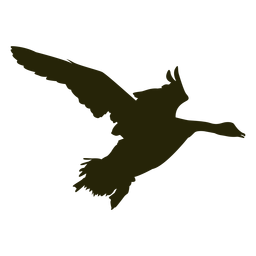 Ganso de caza hacia la derecha batiendo las alas