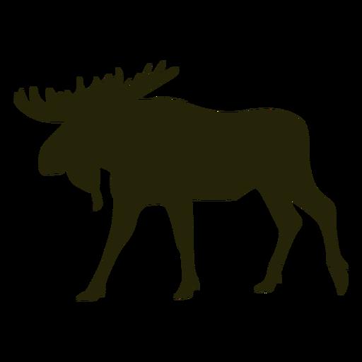 Hunting moose left facing walking