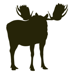Hunting moose right facing standing calm