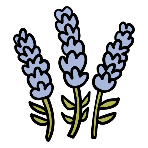 Lavender flower hand drawn Transparent PNG