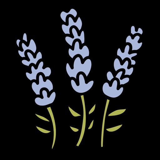 Lavender flower hand drawn