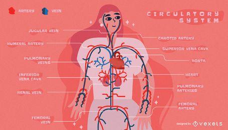 Plantilla de infografía del sistema circulatorio