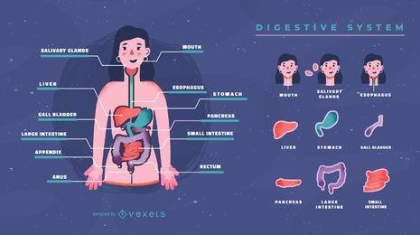Modelo de infográfico de sistema digestivo