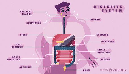 Plantilla de infografía del cuerpo del sistema digestivo