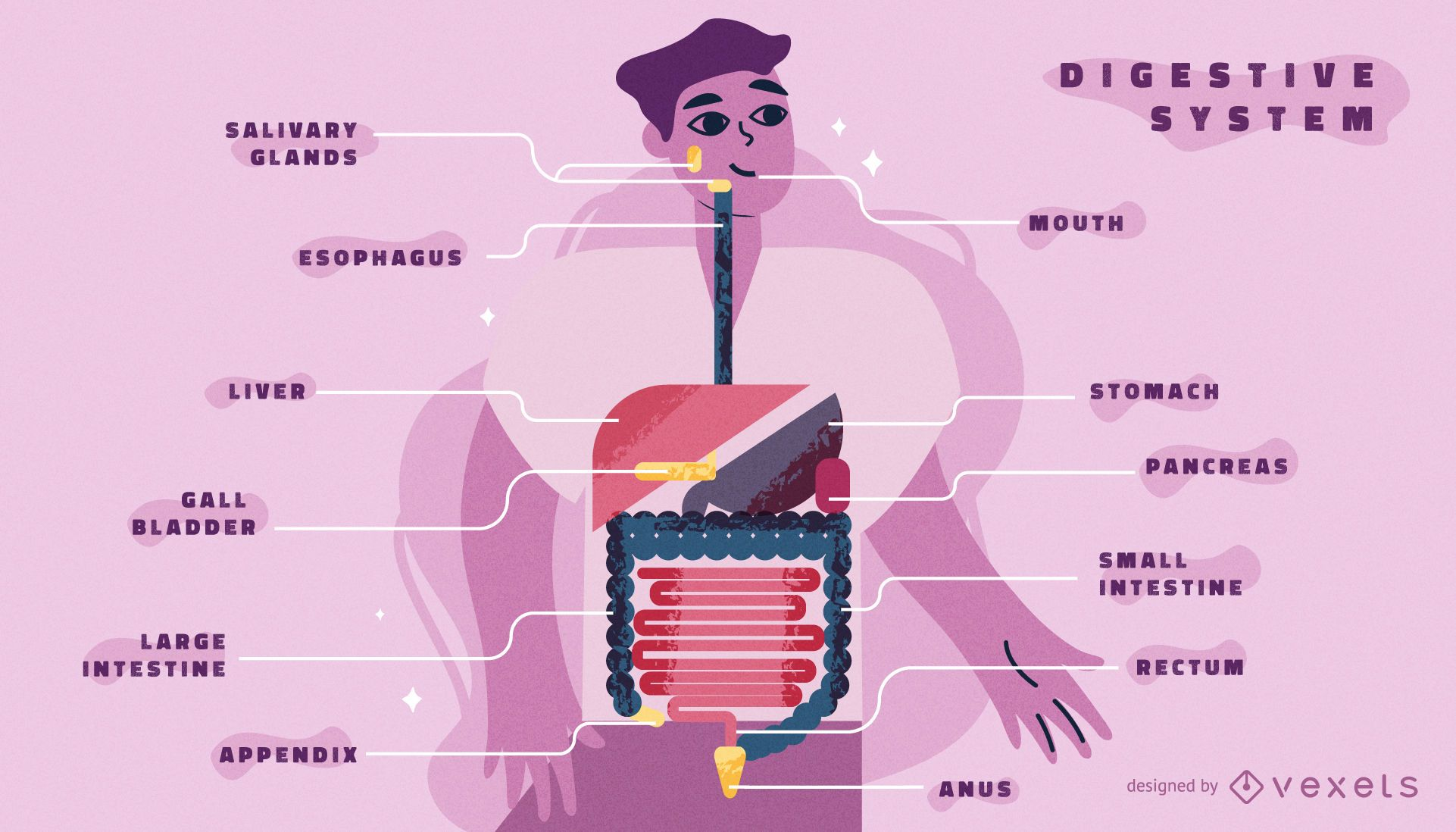 Digestive system body infographic template