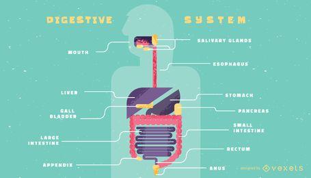 Modelo de infográfico de sistema digestivo humano
