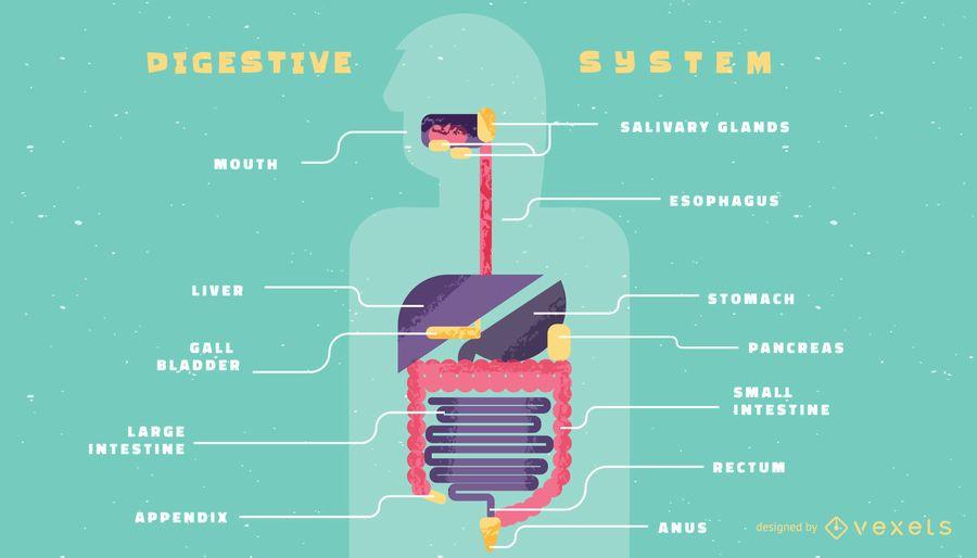 Plantilla de infografía del sistema digestivo humano