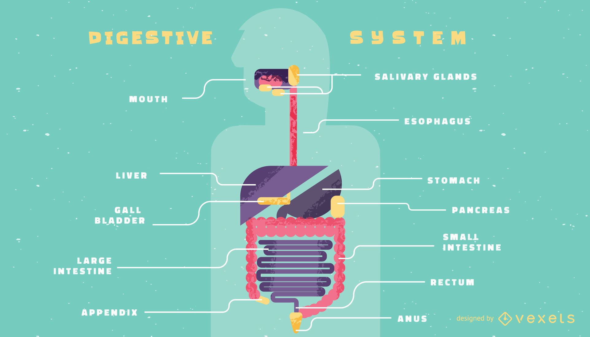 Human digestive system infographic template