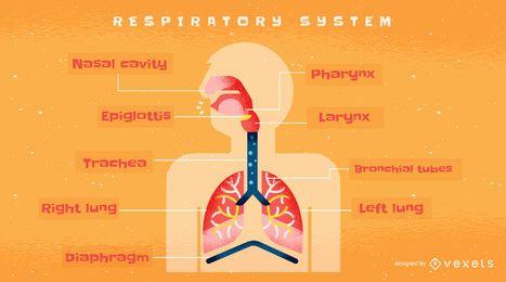 Modelo de infográfico de sistema respiratório humano