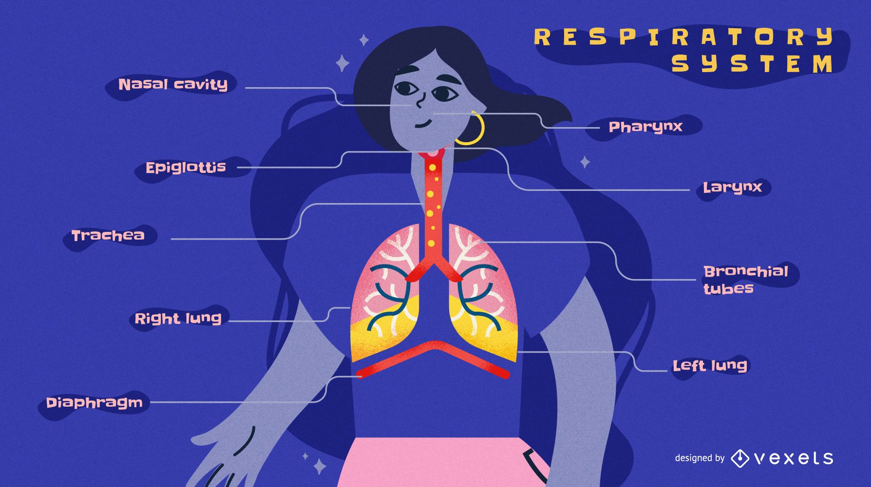 Respiratory system infographic template