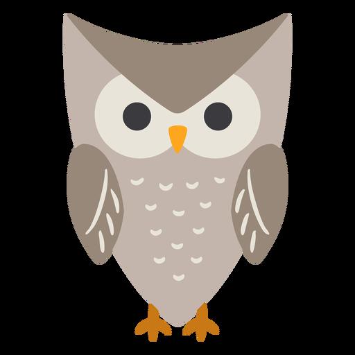 Owl grey eyes open flat