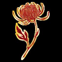 Crysanthemum flower illustration