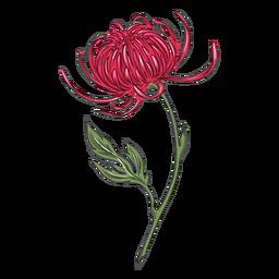 Ilustración detallada de flor de crisantemo