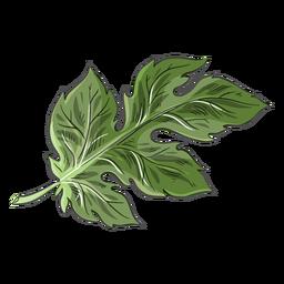 Chinese green crysanthemum leaf