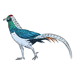 Chinese pheasant bird