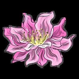 Impresionante flor rosa china
