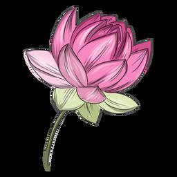 Flor de loto rosa china