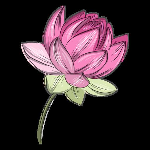 Chinese pink lotus flower