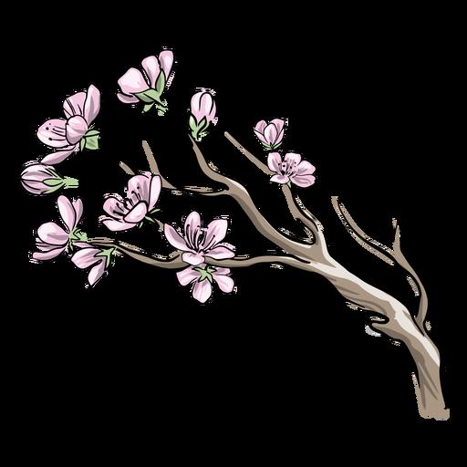 Chinese plum flowers
